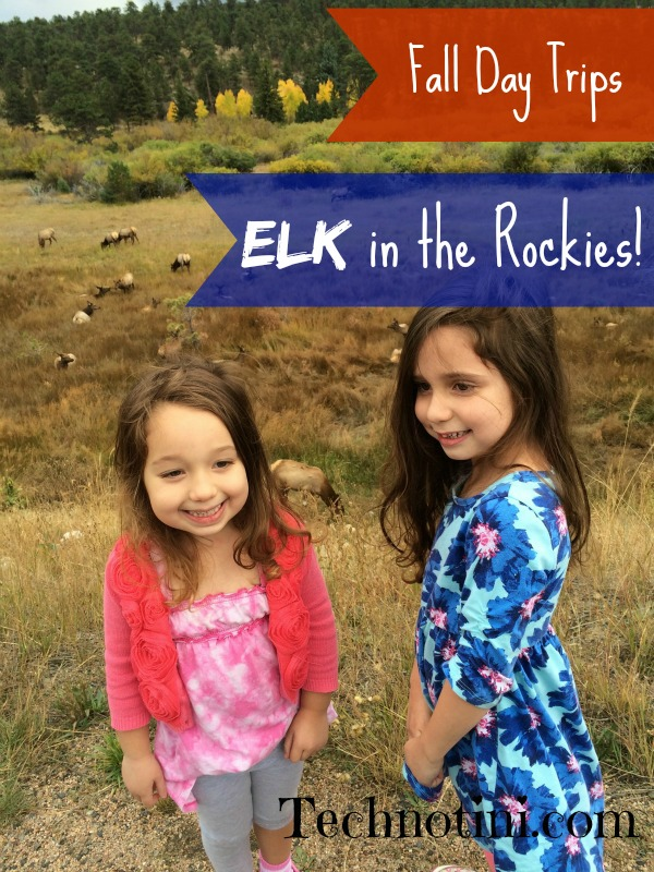 Our new Fall Favorite excursion is seeing the Elk in Rocky Mountain National Park. Check our tips for your next trip! kid-friendly travel |nature trips| Colorado |Fall trips