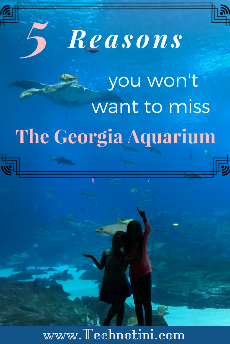 Top 5 Reasons You Won't Want to Miss the Georgia Aquarium